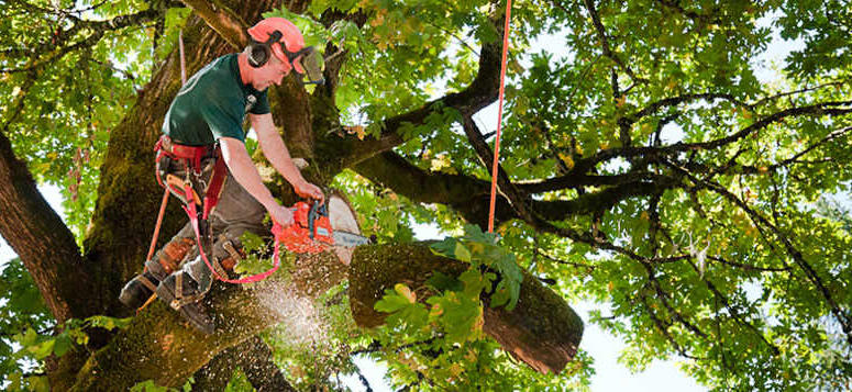 tree service Seattle